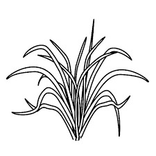 Small Picture Picture of Grass Coloring Pages Color Luna