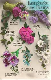 Paper Flower Quotes Language Of Flowers Wonderful Words Pinterest Flowers