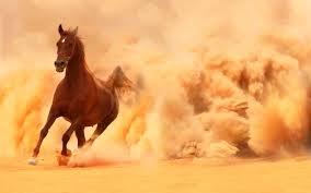 black arabian horse wallpaper. Plain Black Arabian Horse Wallpaper Throughout Black A