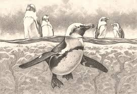 baby penguin drawing in pencil. Wonderful Penguin Drawn Penguin Realistic 8 Inside Baby Penguin Drawing In Pencil