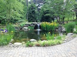 10 ideas for building your pond oasis
