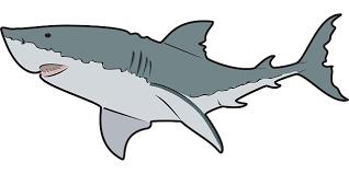 shark clipart. Interesting Clipart Clipart Sharks Inside Shark L