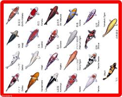 Details About Koi Fish Color Names Identification