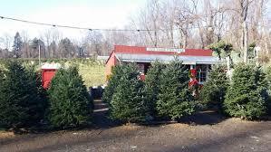 Where To Chop Your Own Christmas Tree Near NYCChristmas Tree Cutting Nj