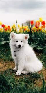 Cute puppy wallpaper, Puppy backgrounds ...