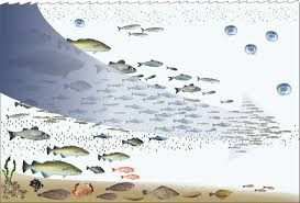 environmental impact of fishing