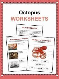 Octopus Facts Worksheets Habitat Information For Kids