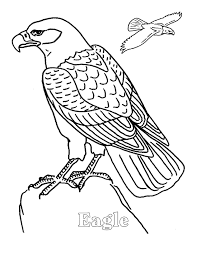 Small Picture Eagle coloring pages e for eagle ColoringStar