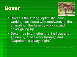 boxer <ul><li>boxer is the strong optimistic hard working cart  boxer <ul><li>boxer is the strong optimistic hard working cart horse who motivates all the animals on the farm by workin