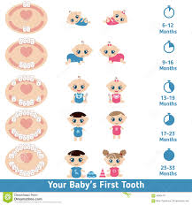 Teething Chart For Babies Baby Teething Chart Stock Vector Illustration Of Care 68894701