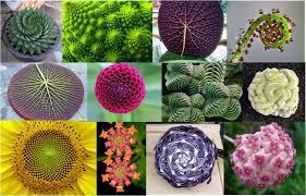 Matemáticas para la vida: Simetría en la naturaleza