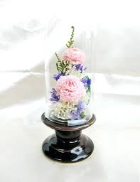 preserved flowers in glass glass case into french flower mausoleum pink dahlia preserved real preserved flowers preserved flowers in glass