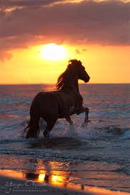 horses running in the sunset. Exellent Horses Top 10 Horses Pictures  Beauty Harmony Life In Running The Sunset A
