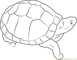 Small Picture Eastern Box Turtle Coloring Page Free Turtle Coloring Pages