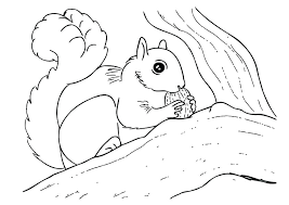Squirrel Coloring Page Excellent Flying Squirrel Coloring Page For