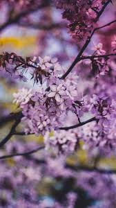 Flower Background Iphone 7 - 1242x2208 ...