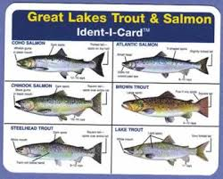 Great Lakes Salmon Trout Ident I Card Waterproof Freshwater Fish Identification Card