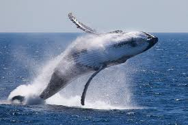 Image result for whale watching wallpaper