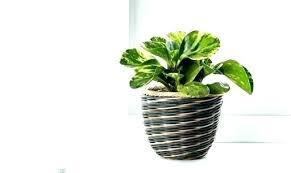 Small Indoor Pots Planters For Indoor Plants Plants Pots Indoor Plant Pots  Indoor Pots For Plants .