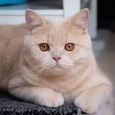 Les robes du chat : quelle est la couleur de mon chat ? — The Little  Carnivore