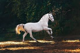 Horse Wallpapers: Free HD Download ...