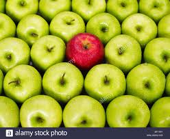 green and red apples. stock photo - red apple standing out from bunch of green apples and