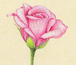 Flowers Drawings In Color Pencil L