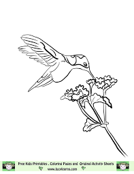 Small Picture 68 best hummingbird stamps images on Pinterest Drawings