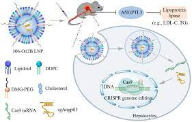 Lipid nanoparticle-mediated codelivery of Cas9 mRNA and single-guide RNA  achieves liver-specific in vivo genome editing of Angptl3