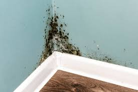 how to remove mold from walls and when
