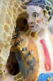 Wanita cantik yang terbuat dari sarang lebah ini pasti terlihat anggun sekaligus menyeramkan, bukan? - 9bf6b760155239612e2a50641fdd84ef