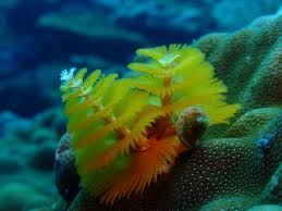 Beyond Gorgeous Great Barrier Reef 46 PICSChristmas Tree Worm Facts