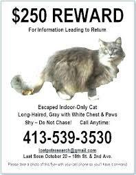 Missing Cat Poster Template Lost Poster Template Ks1 Maths Geography Ensite Info