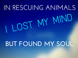 Rescue Dog Quotes Enchanting Inspirational Rescue Dog Quotes What Every Dog Deserves