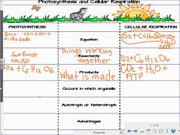 compare and contrast cellular respiration and photosynthesis  compare and contrast cellular respiration and photosynthesis lesson