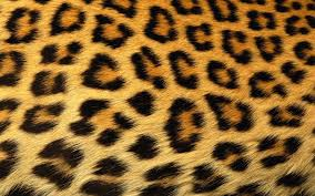 animal print desktop wallpaper. Animal Print Wallpaper 17826 HD Wallpapers Topwallpics To Desktop
