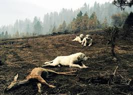 What Is Idaho Known For Three Dogs Protected A Fawn After She Died In Idaho Wildfire Urdogs