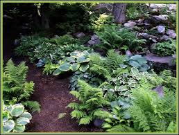 Small Picture Shade garden ferns and hostas Gardens Ideas Vermont Flower Pre