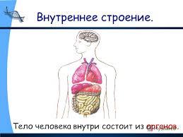 Презентация на тему Строение тела человека Организм человека  Тело человека внутри состоит из органов