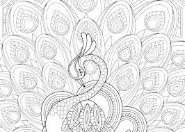 Peacock Coloring Pages Trustbanksurinamecom