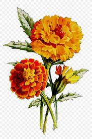 Marigold Floral Design English Marigold Floral Design Oil Cut Flowers Huile De