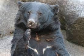 なめ とこ 山 の 熊 あらすじ