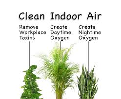 Image result for indoors air quality