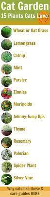 31 plants for cats ideas plants cat