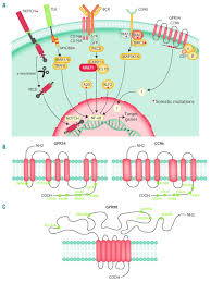 Gpcr Signaling G Protein Coupled Receptor Gpcr Mutations In Lymphoid