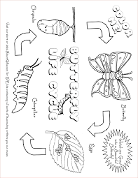 Free Butterfly Coloring Pages Butterfly Life Cycle
