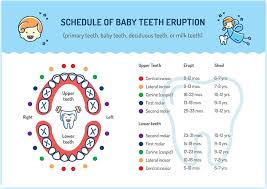 When Do Babies Get Teeth Chart Tooth Eruption Chart For Baby And Adult Teeth