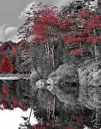 image detail for black and white photos with color accents pictures 1 flowers splashing pinterest color accents colour splash and splash photography on black and white with a splash of red wall art with image detail for black and white photos with color accents pictures