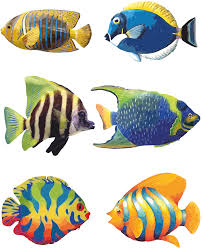 coral reef fish drawing. Modren Fish 28 Collection Of Fish Drawing Easy Colour  High Quality Free  To Coral Reef E