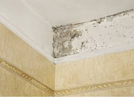 kill bathroom mould without bleach
